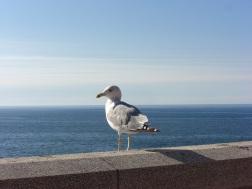 Seagull (fond memories)