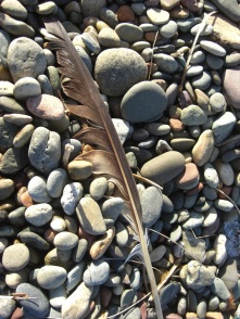 Feather No.2