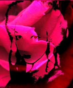 Marie Antoinette (Pink 2)